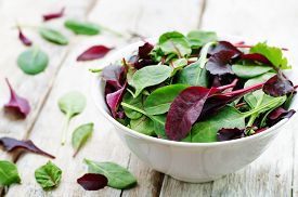 foto of food plant  - mix salad Romaine arugula spinach mizuna chard oak salad on a white wood background - JPG
