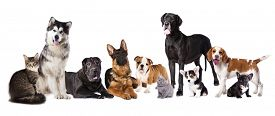 stock photo of coon dog  - Group of dogs and cats - JPG