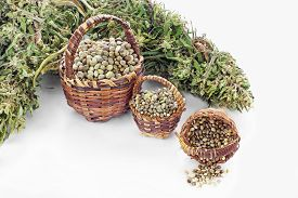 stock photo of seed bearing  - Three kinds of hemp seeds in small baskets and dried hemp leaves - JPG