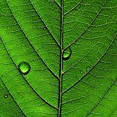 textura da árvore folha