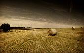 grunge image of Straw bales on farmland