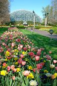 stock photo of geodesic  - Saint Louis Botanical Garden with view of geodesic dome - JPG