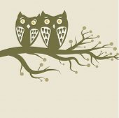 Owls couple on the tree.