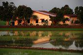 Ver, Bauernhof, Reisfeld und Bäume auf dem Lande