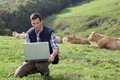 Criador de sentar-se no campo do gado com computador portátil