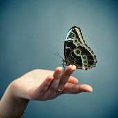 butterfly on the palm, blue background