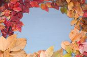 Red And Yellow Leaves Of Autumn Chill Gray Background poster