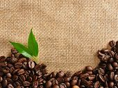stock photo of coffee crop  - coffee border - JPG