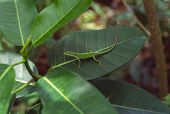 Green Lizard On A Leaf