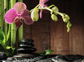 spa frame from bamboo grove, pink orchid and black zen stones on the old wooden background