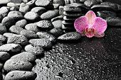 ������, ������: ����������� ����� � ������� ����������� orchid ����� �����