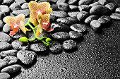 Постер, плакат: базальтовые камни и Орхидея после дождя