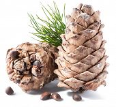 Pine nuts cone and pine nuts on the white background. Organic food. poster