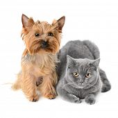 picture of cat dog  - Dog and cat on white background - JPG