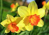 April-Blumen