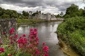 Red flowers at Adare castle