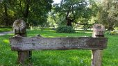 Sign ( Polana Debow Zabytkowych ) - Means, Glade Of ( Historic, Monument ) Oaks. Europes Biggest Are poster