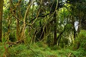 stock photo of epiphyte  - Montane forest - JPG