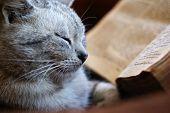 Gato do bibliófilo