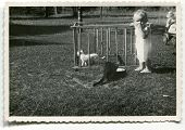 Vintage unretouched photo of baby girl playing with cats