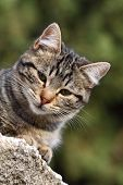 Close-up Portrait Of Domestic Cat Over Natural Background