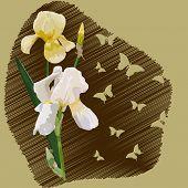 Irises2