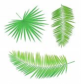 Palm Branch Set, Long And Round Leaves With Sharp Edges Isolated Hand Drawn Green Foliage. Summer Be poster