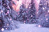 Beautiful Winter Landscape With Forest, Trees And Sunrise. Winterly Morning Of A New Day. Purple Win poster