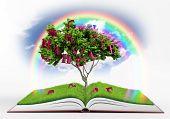 Book Fantasy