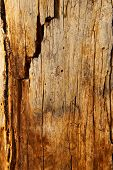 Tree Trunk With Cracks And Holes