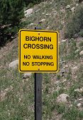 Warning Sign: Big Horn Sheep Crossing
