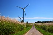 Silver Grass With Windmill