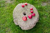 Red Apples On Ancient Millstone