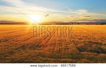 Sunset Over Wheat Field. poster