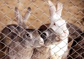 pic of rabbit hutch  - Grey domestic rabbits rabbits are in a cage - JPG