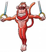 Brave monkey hanging from flying rings