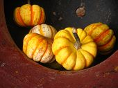 a contrasting gourd arrangement in clay pot