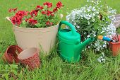 picture of lobelia  - gardening tools and flowers  - JPG