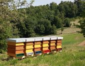 stock photo of beehives  - Beehives in garden with green grass - JPG