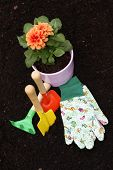 Dahlia And Gardening Tools