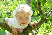 stock photo of white bark  - Smiling child climbing a tree in the garden - JPG