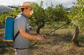foto of pesticide  - Agricultural worker spraying pesticide on fruit trees - JPG