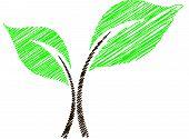 Scribbled art of a Seedling