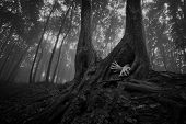 picture of eerie  - Horror hands coming out of tree burrow in a dark eerie spooky creepy forest with fog - JPG