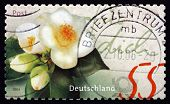 Postage Stamp Germany 2004 Canellia, Plant, Greeting