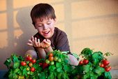 Cute little boy with homegrown cherry tomatoes