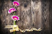 Gerbera And Gold Ribbon On The Old Board.