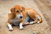 Pooch dog