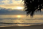 Sunrise at Byron Bay with Pandanus Silhouette