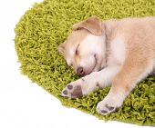 stock photo of golden retriever puppy  - Little cute Golden Retriever puppy on green carpet - JPG